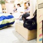 Pee Pee´s und Café Felidae: Katzencafés in Berlin